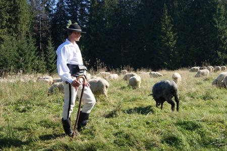 4 niedziela Wielkanocy - Rok A - Niedziela dobrego pasterza