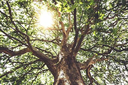 Sycamore Tree - Polska Parafia w Londynie